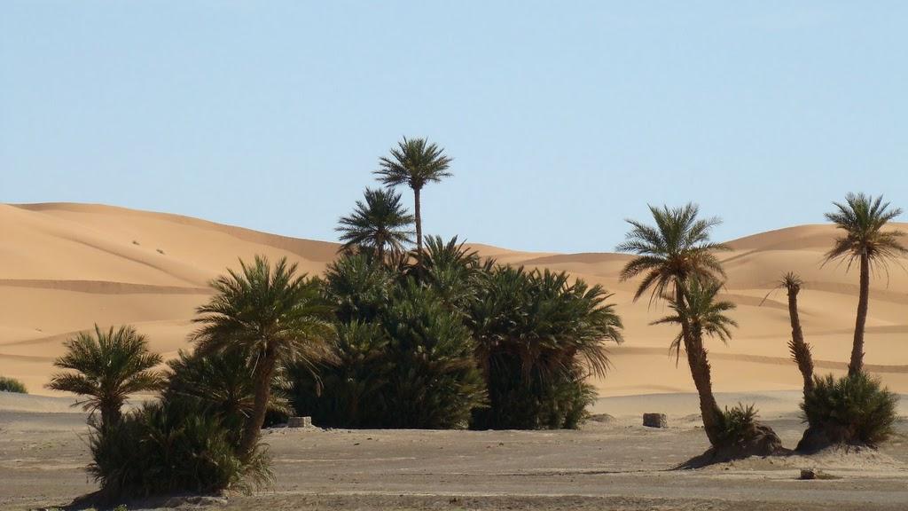 merzouga_oasis